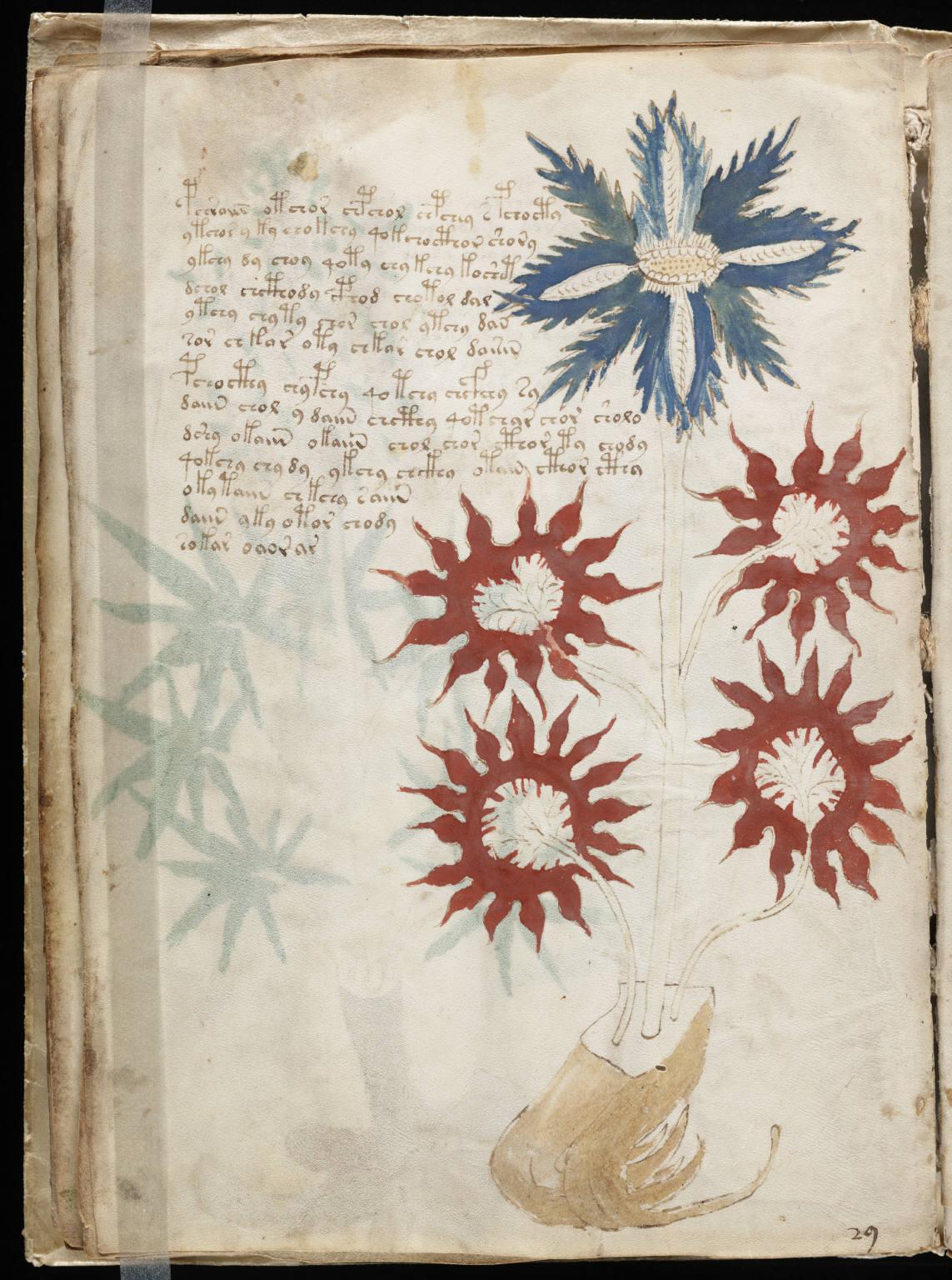 Страница из манускрипта Войнича